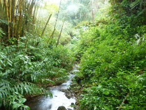 A short hike to the Akaka Falls led us through Rainforest.