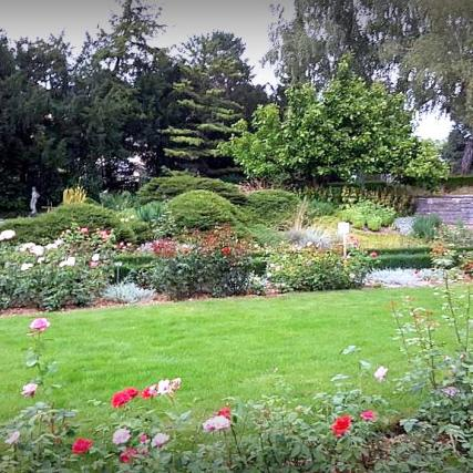 Rose garden-5