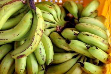 Banana galore