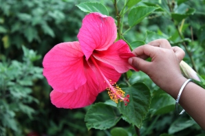 Love that tiny hand touching the big Hibiscus!