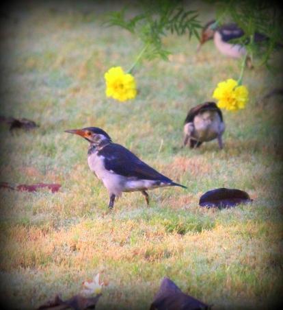 Birds having a good time